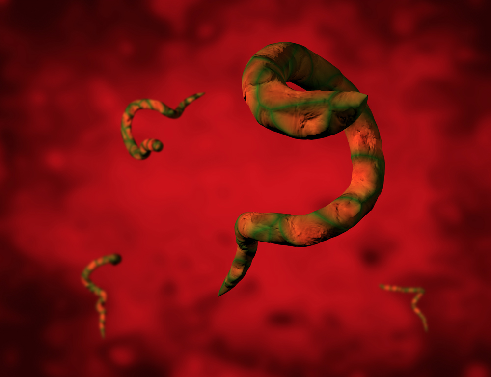 Graphic depiction of several parasites, orange and green in color, against a textured red backdrop.
