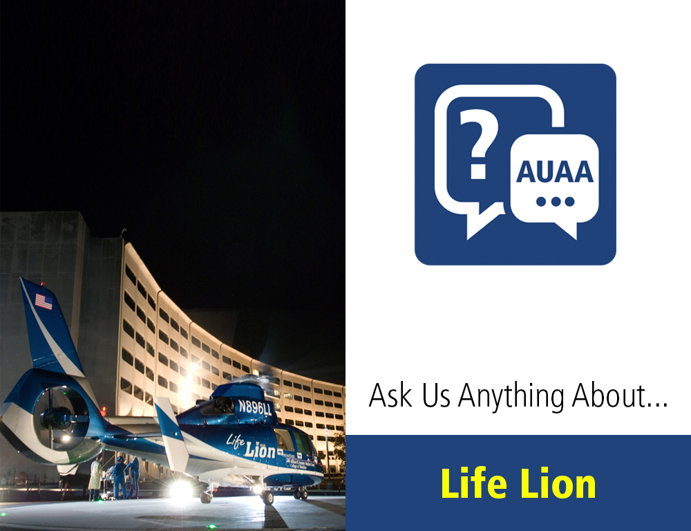 Ask Us Anything About Life Lion