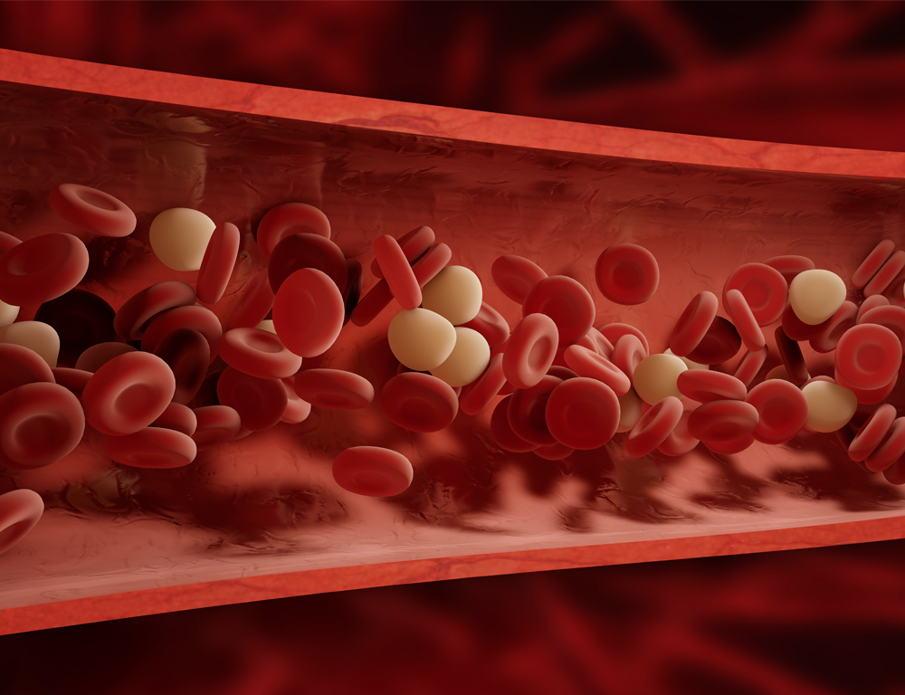 A graphic depiction of the cross-section of a blood vessel, with blood cells represented by numerous, small red and white discs.
