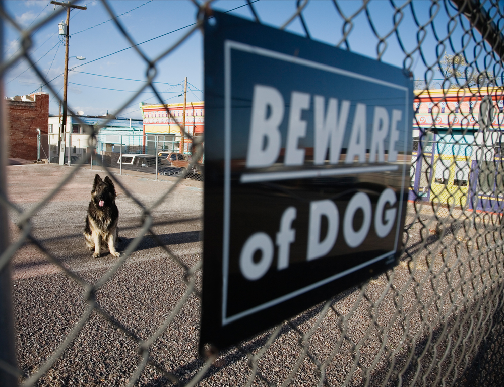A chain link fence is in the foreground, with a sign that reads ˜Beware of Dog.™ The fence and sign appear slightly out of focus. Through a hole in the fence, a sitting dog is visible and in focus.
