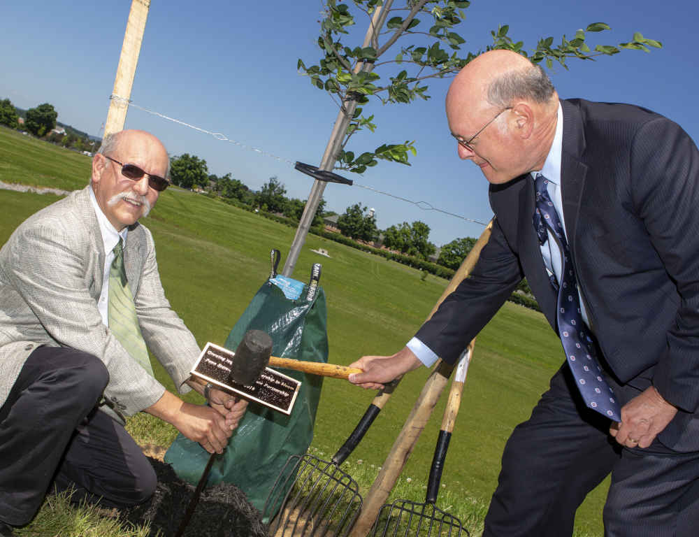 One man holds a small sign post in the ground while the other taps the top of the sign with a hammer to drive it into the ground. The sign is at the base of a newly-planted tree.