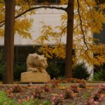 A statue of the Nittany Lion sits in the Penn State College of Medicine courtyard. Trees with fall leaves hang over it. Impatient flowers and a green bush are in the foreground. Behind it is the College of Medicine building.