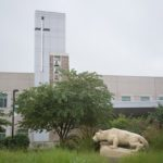 A statue of the Penn State Nittany Lion at the Penn State Health St. Joseph campus appears in profile in front of a row of trees and weeds. Behind the scene rises a glass tower and bells and windows.