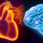 An illustration of a human heart is positioned next to an image of a human brain on a purple and black background.