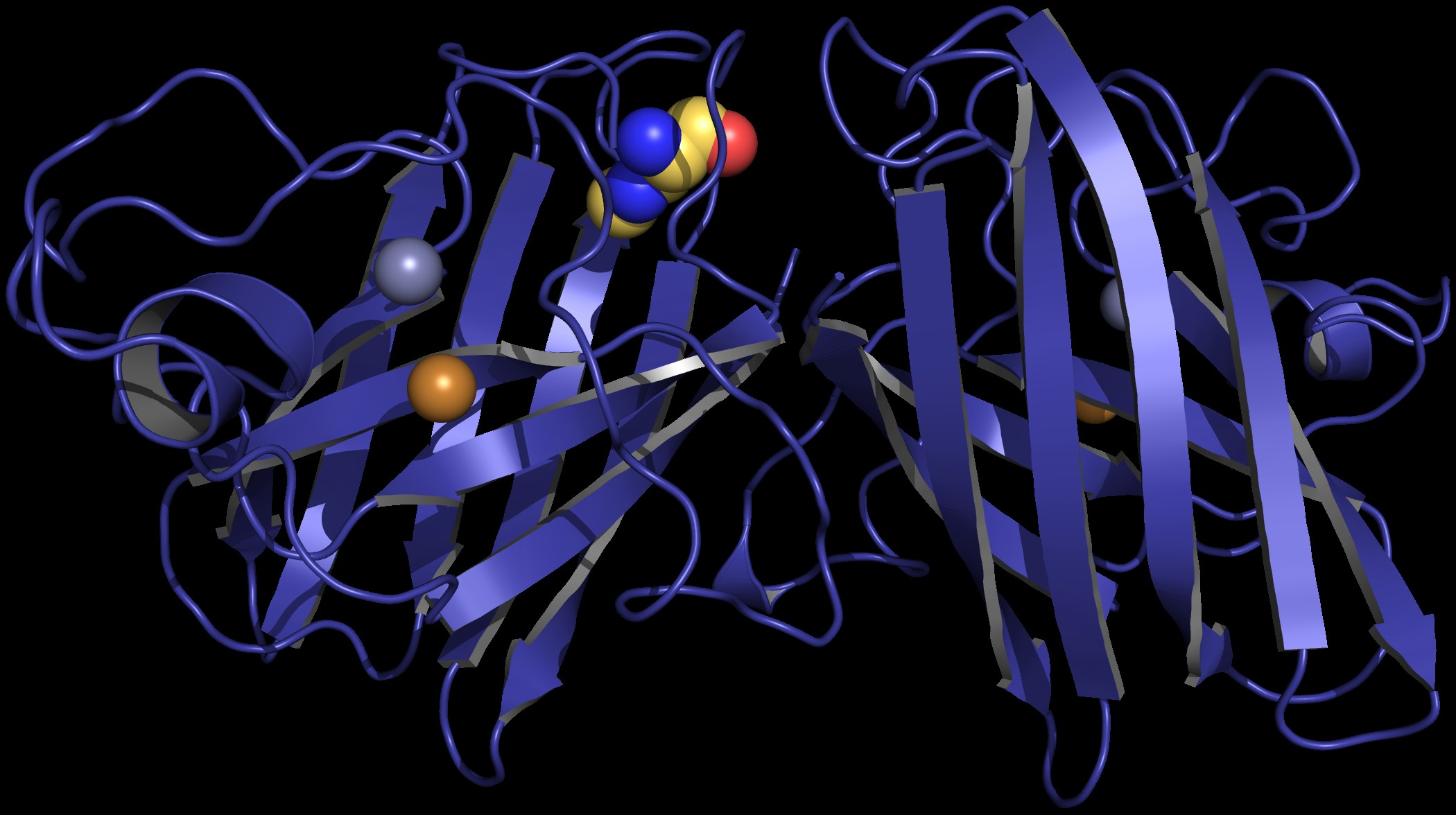 A computer-generated model of a protein