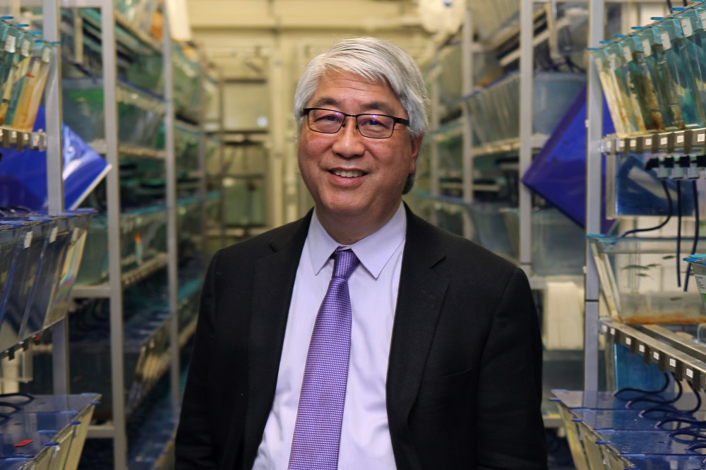Dr. Keith Cheng, Penn State College of Medicine pathology professor, stands in the middle of rows of plastic containers filled with zebrafish. He is wearing a suit, dress shirt and tie and has glasses and short, white hair.