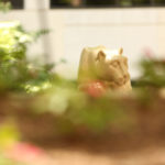 Penn State College of Medicine's Nittany lion statue is seen in a courtyard in the summer.