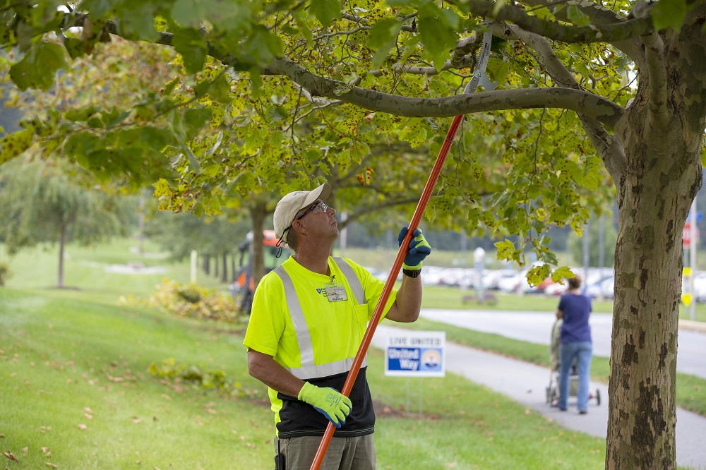 Steve Wallace, wearing gloves and a ball cap, uses a cutter on a long pole to trim a tree on the Hershey Medical Center campus.
