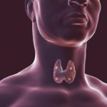 A cumber generated image showing the thyroid