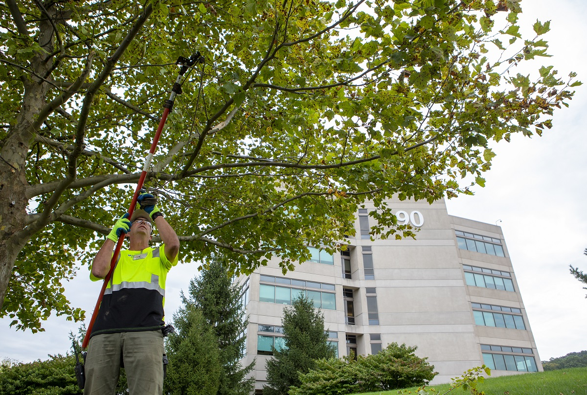 A man who is a Hershey grounds crew member lift a tree trimming tool as he trims the branch of a tree. He is wearing a reflective shirt and baseball cap. Behind him is a tall building with the number 90 on it.