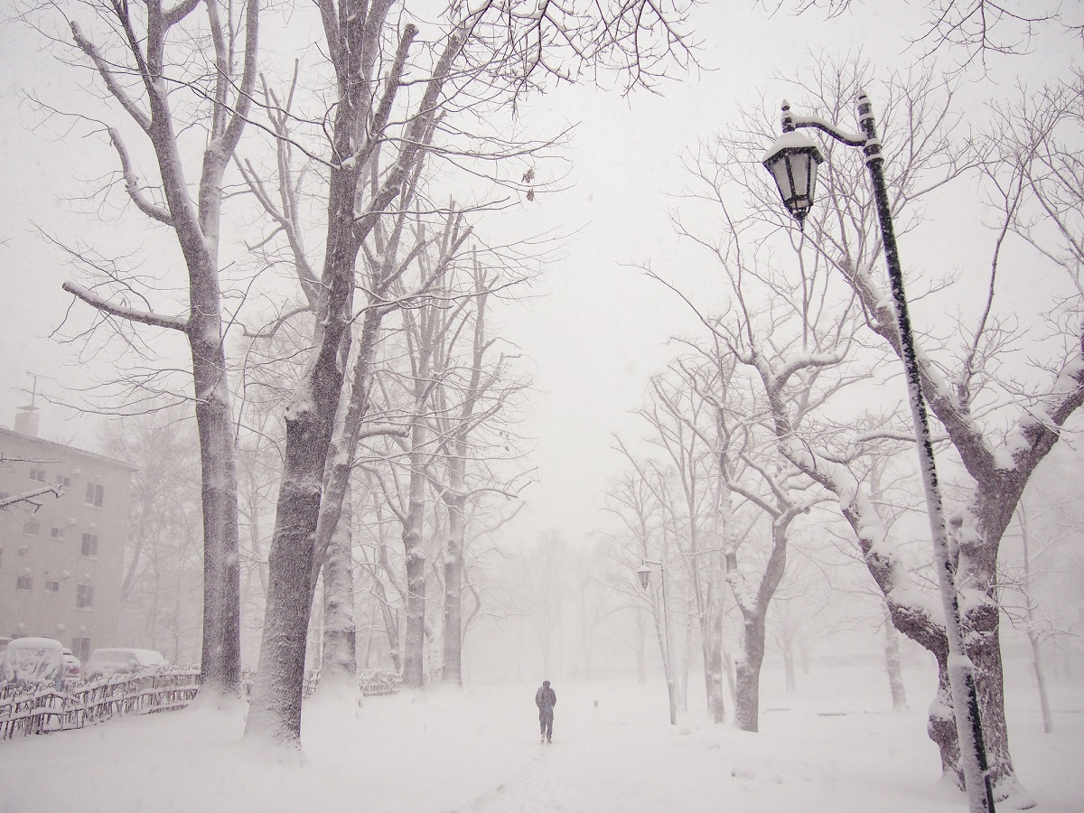A wintry scene shows bare trees and someone walking.