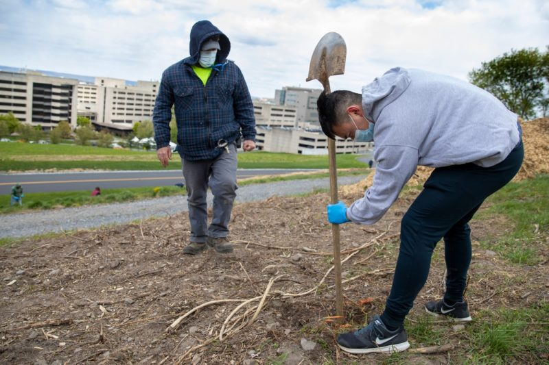 Man wearing a grey hoodie, black pants, face mask and gloves uses a shovel to dig a hole for a tree while another man, wearing a flannel shirt, jeans and a face mask, looks on.