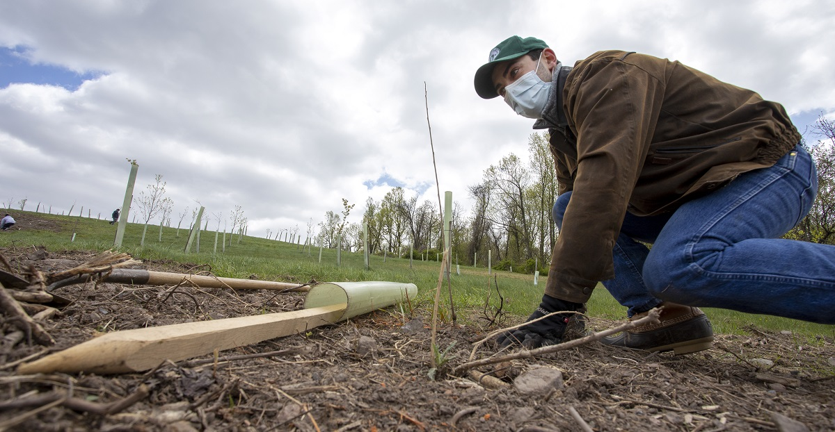 A man kneels close to a rough patch of ground. Behind him, rows of saplings reach toward the crest of a hill where two others can been seen crouching and walking. The man wears a baseball cap, jacket, jeans, boots and gloves. He's also wearing a surgical mask.